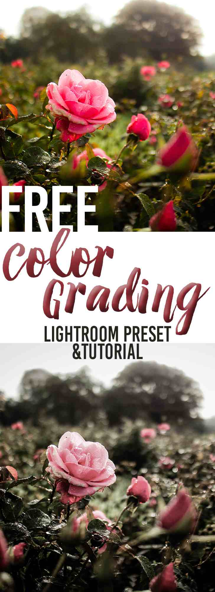 Color Grading Tutorial and Free Lightroom Preset