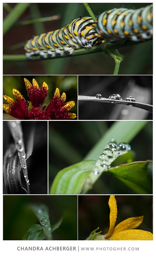 photogHer's Guide to Freelensing - collage worms - blog
