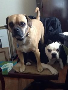 Mosby & Fenny - Caroline's boys have the mostest personality of any dogs I know!